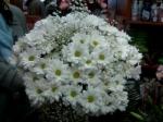 Цветы с доставкой в город Заполярный (Мурманская область)